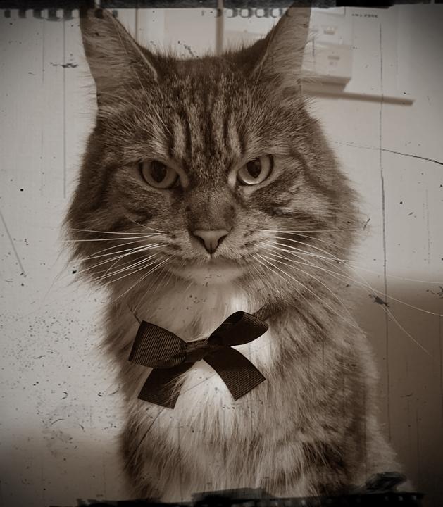 飼い猫卑弥呼